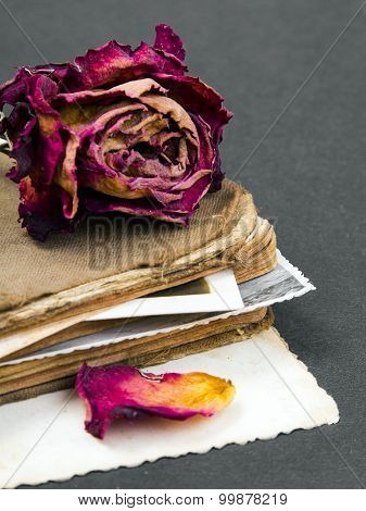 dried rose old book and empty photograph