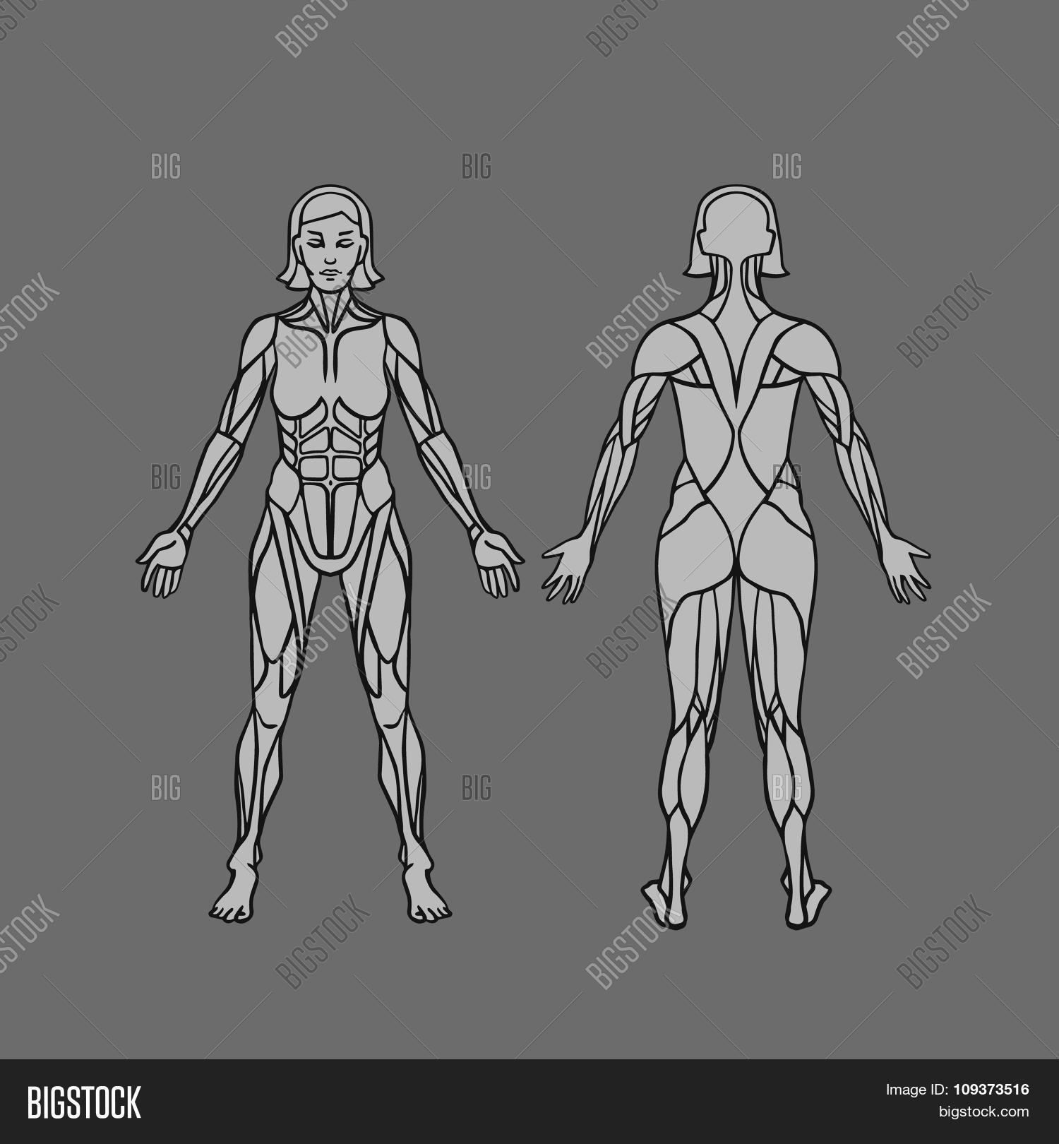 Anatomy Female Vector & Photo (Free Trial) | Bigstock