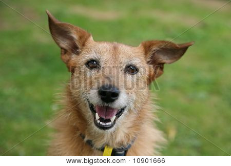 Dog with a happy smile