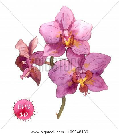 Watercolor painted orchid