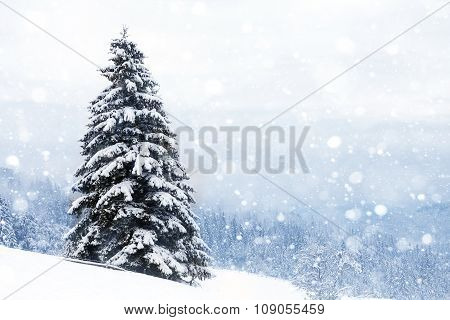Spruce Tree Foggy Forest Covered By Snow In Winter Landscape.