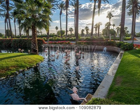 Flamingos at the JW Marriott Desert Springs