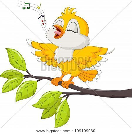 Cute yellow bird singing isolated on white background