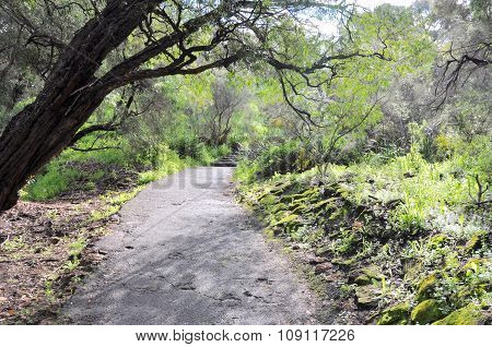 King's Park Path in Nature's Green