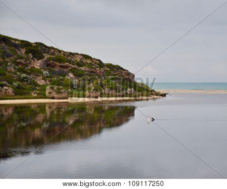 Pelican: Dawn at the Moore River,Western Australia