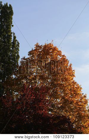 Tops Of Colorful Autumn Trees