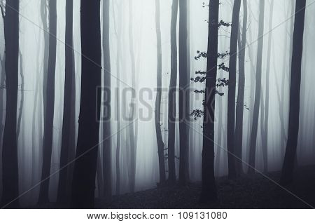 Dark mysterious trees in haunted forest