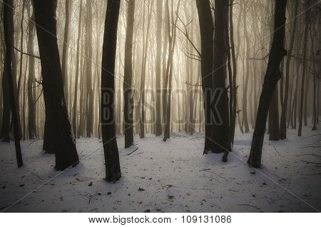 Magical Christmas morning with fog and light