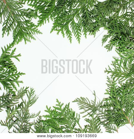 ever green fir tree decoration for christmas card isolated