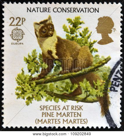 stamp printed in Great Britain dedicated to nature conservation shows a pine marten (Martes martes)