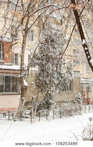 Snowfall In The Yard