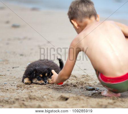 Puppy And Boy