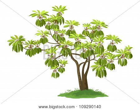 Exotic Green Plant