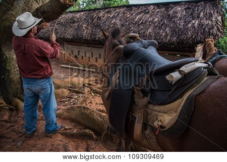 Vinales Valley, Cuba - September 24, 2015:  Local Cowboy Prepare Horese For Ridding, In Coutryside R
