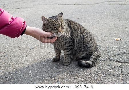 Female Hand Closeup Petting Stray Cat