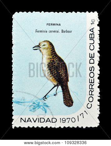 Cuba 1970 The Zapata wren bird
