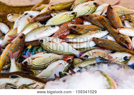 Colored fishes