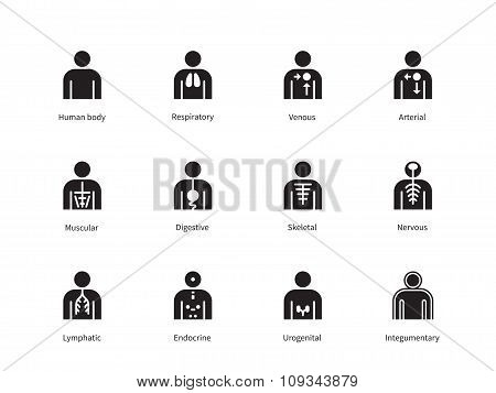 Human Body Systems icons on white background.