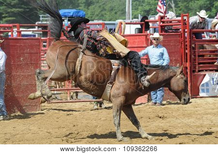 A Rodeo Cowboy Riding A Bareback Bucking Bronco