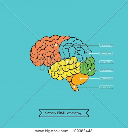 Brain Side 1
