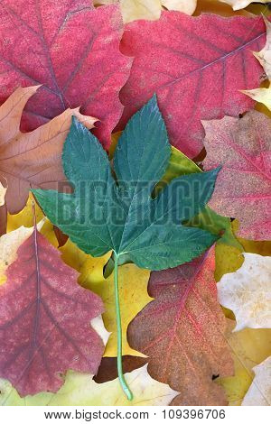 Colorful Blanket Of Fallen Leaves