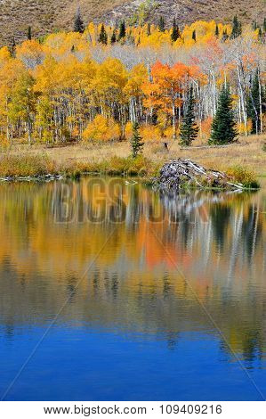 Mountain Beaver Pond In Autumn