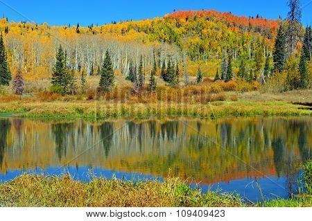 Autumn colors Reflecting in Pond