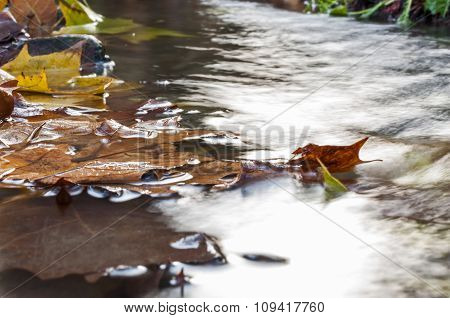 Leaves Falling In The Water