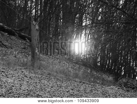 light in the mysterious forest