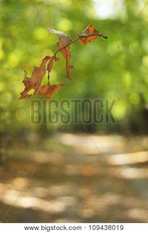 Leaf texture. Oak leaf. Falling leaf on the autumn background.