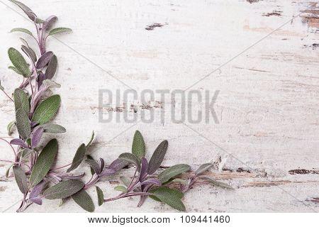 Sage Background.