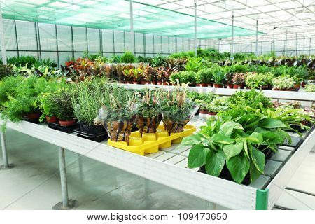 Huge greenhouse with lot of flowers and plants for sale poster