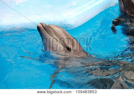 Cute dolphin in the dolphinarium