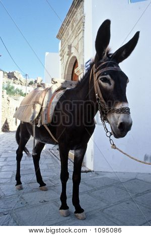 Donkey On The Streets Of Lindos Rhodes