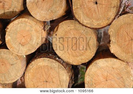 Wood Pile