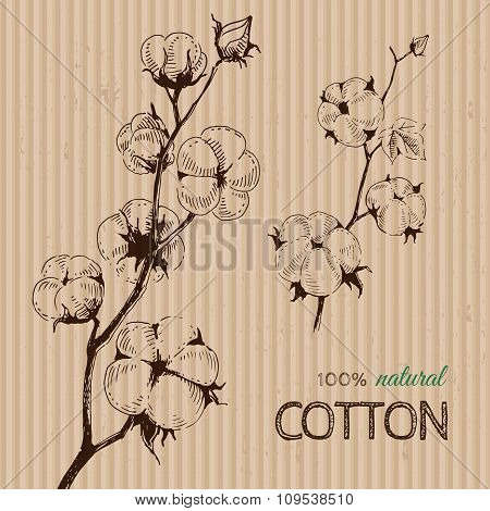 Vector hand drawn cotton plants on cardboard.