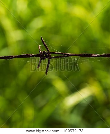 Barbed Wire Rusting Metal Textures And Patterns
