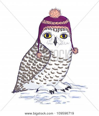 Colorful white owl in purple hat with pompon.
