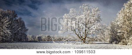 Panoramic Pristine Winter Scenery