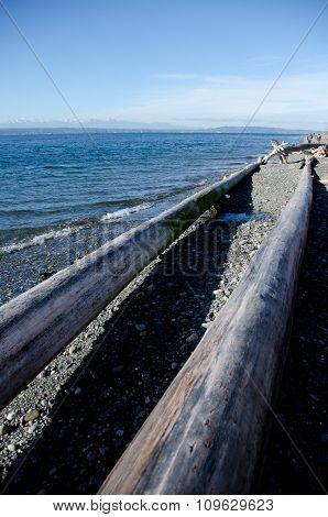 Tall Logs Frame Beach Trail Near Richmond Wa
