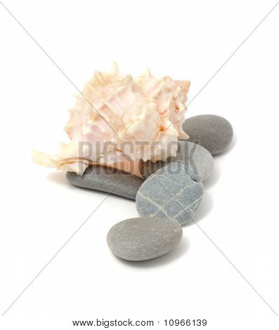 Sea Stones And Shell