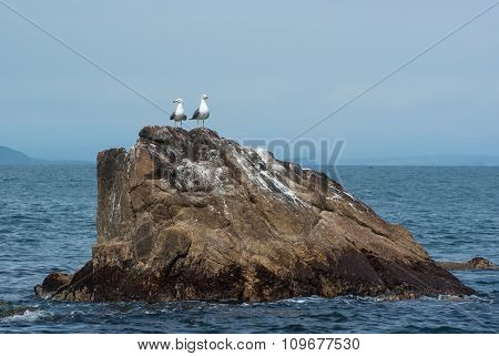 Two Seagulls On A Rock Jutting Out Of The Sea.