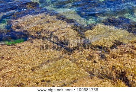 Underwater Rocky Reef: Cape Peron, Western Australia