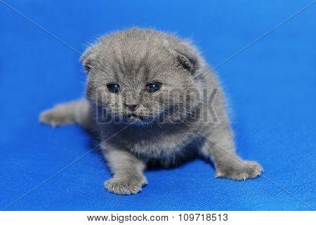 Kitten is newborn.
