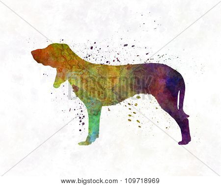 Swiss Hound In Watercolor