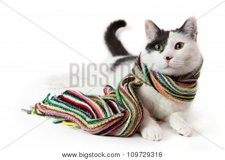 Portrait of a black and white cat in a colorful scarf
