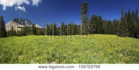 Meadow And Mount Peale In Utah Panoramic