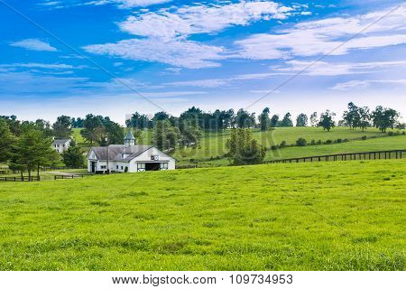Horse Farms Landscape.