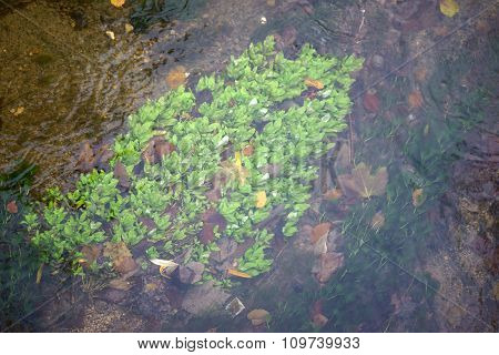 Plants in the flowing stream