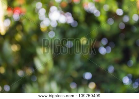 Colourful Spark And Blow Natural Bokeh Of Tree, Flower With Sunlight